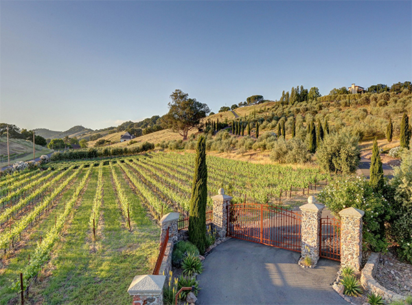 View of the Vineyards upon entering. (all images via Sotheby's)