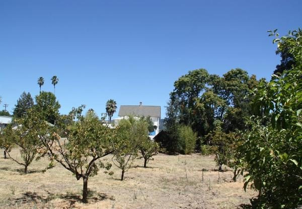 Orchard. (Image via North County Properties)