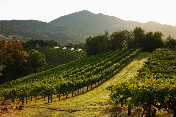 Vineyards. (Image courtesy of Coldwell Banker Previews International)