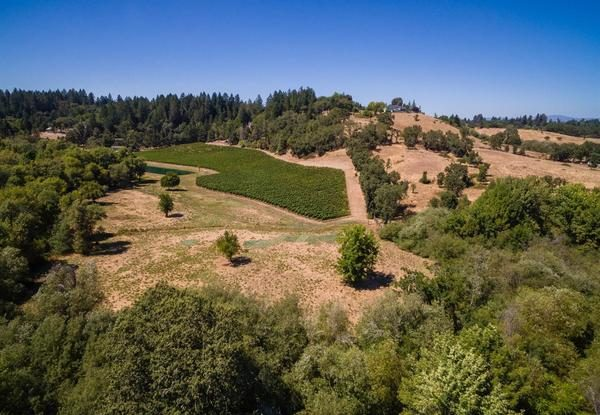 Vineyard aerial view.